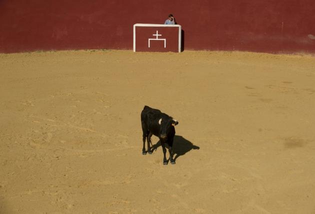 Dans l'arène d'entrainement Montes de Oca, dans le sud de l'Espagne, le 26 mai 2020 [JORGE GUERRERO / AFP]
