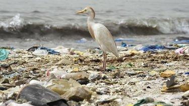 La quantité de plastique dans les océans devrait tripler d'ici à 2040 si rien n'est fait pour améliorer la situation.