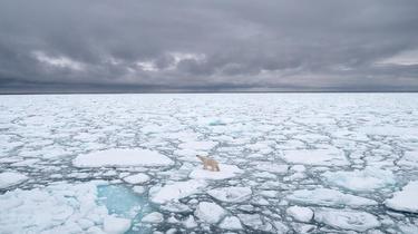 Les scientifiques ont comparé la situation actuelle avec la précédente période interglaciaire, il y a 127.000 ans.