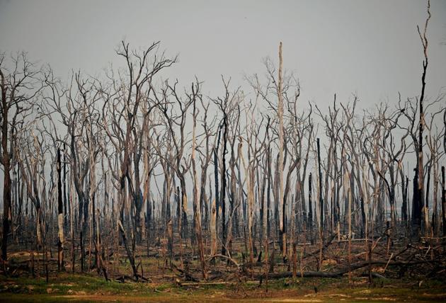 Arbres calcinés dans la forêt amazonienne, le 24 août 2019, près d'Abuna, dans l'Etat de Rondonia au Brésil [Carl DE SOUZA / AFP/Archives]