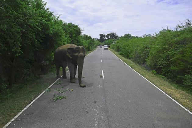 Un éléphant traverse une route, le 12 juillet 2020, près d'une zone de protection de la nature à Kataragama (Sri Lanka) [Ishara S. KODIKARA / AFP]