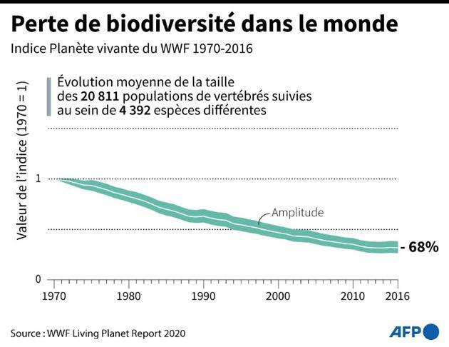 Perte de biodiversité dans le monde [Gal ROMA / AFP]