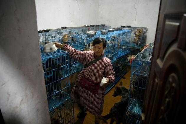 Des chiens en cages dans la maison de Mme Wen à Chongqing (Chine) le 29 novembre 2020 [NOEL CELIS / AFP]