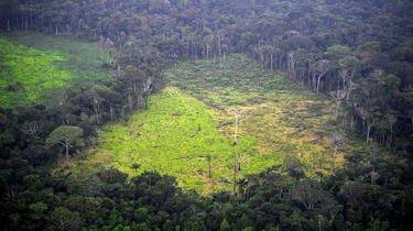 Des parcelles de terrain en Amazonie sont vendues via Facebook.