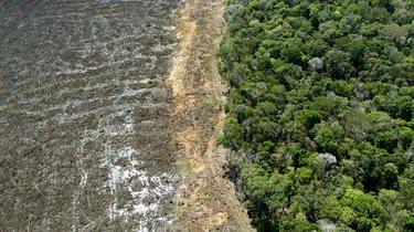 La déforestation en Amazonie est a son plus haut niveau depuis 2008.