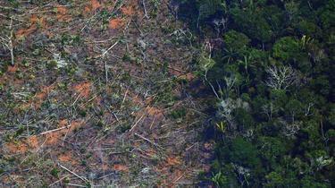 La déforestation de l'Amazonie brésilienne a atteint un niveau record au premier semestre, avec une accélération de 25 % par rapport à la même période l'an dernier.